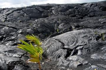 Parque Nacional dos Vulcões do Havaí