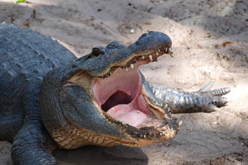 St Augustine Alligator Farm Zoological Park