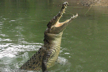 Hartley Crocodile Adventures - Atracciones en Palm Cove