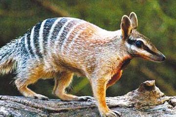 Perth Zoo, Western Australia