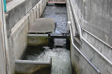 Chittenden Locks & Fish Ladder (écluses de Ballard)
