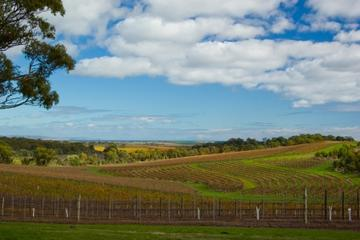 McLaren Vale Wineries, South Australia