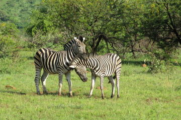 Wildlife Parks from Johannesburg