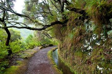 Laurisilva Rainforests of Madeira
