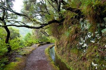 Laurisilva Rainforests of Madeira