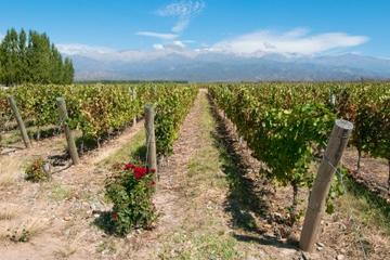 Wine Lover's Guide to Mendoza