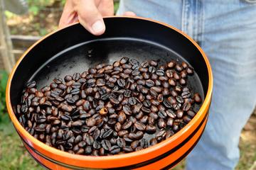 Kona Coffee Tours on the Big Island of Hawaii