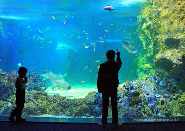 64a9f96a The 10 Best SEA LIFE® Sydney Aquarium Tours & Tickets 2019 | Viator
