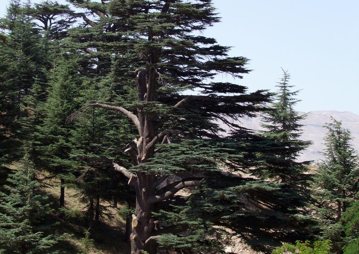 Forest of the Cedars of God (Horsh Arz el-Rab)