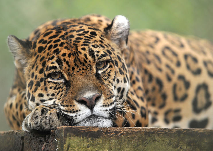 The Best La Aurora Zoo Tours Tickets 2019 Guatemala City Viator