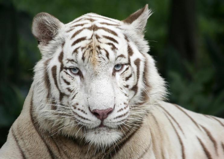 Zoo de Singapour