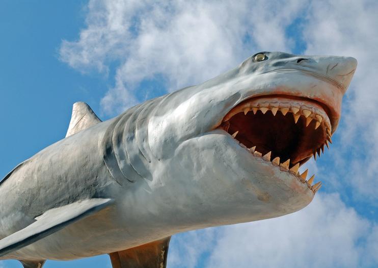 Punta del Este Museum of the Sea (Museo del Mar)