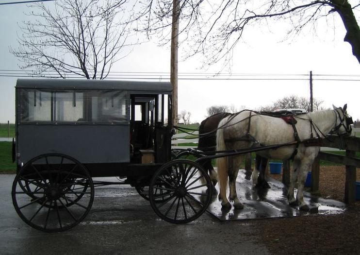 Der Amischen