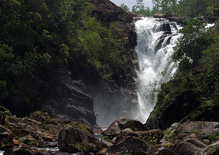 Reserva Forestal Montaña de Pine Ridge