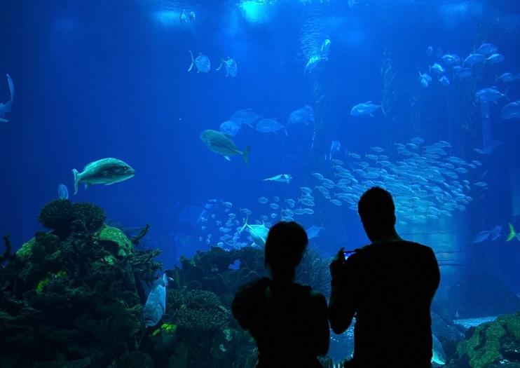 Acuario Downtown (Downtown Aquarium)