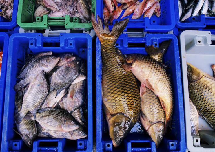 Mercado de Pescado Noryangjin
