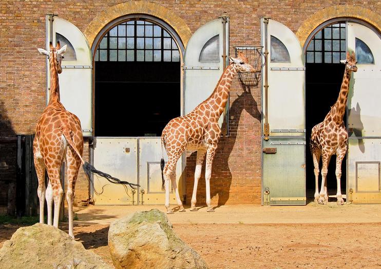 Lo Zoo di Londra