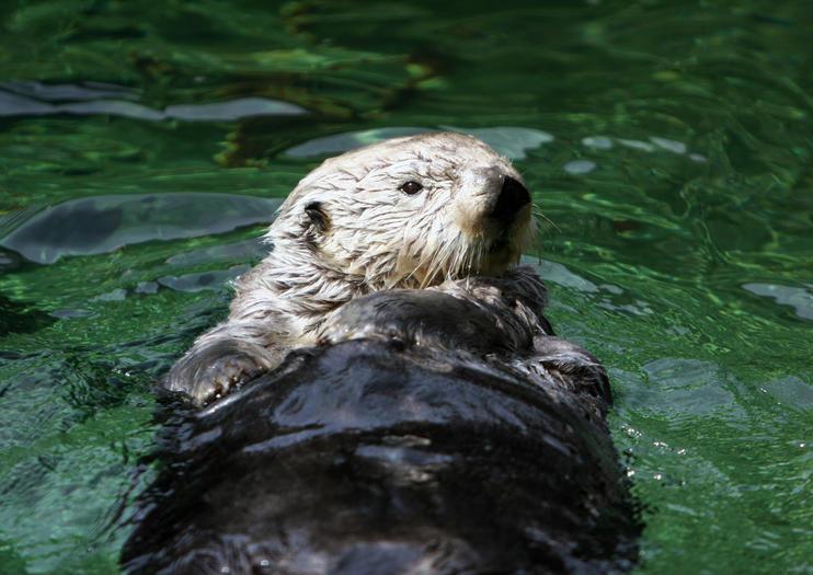 Vancouver Aquarium im Zentrum für Meereswissenschaft