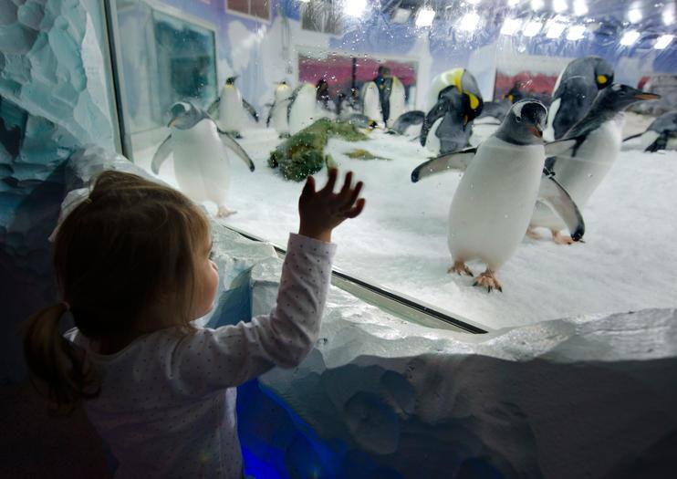SEA LIFEケリー・タールトンズ水族館