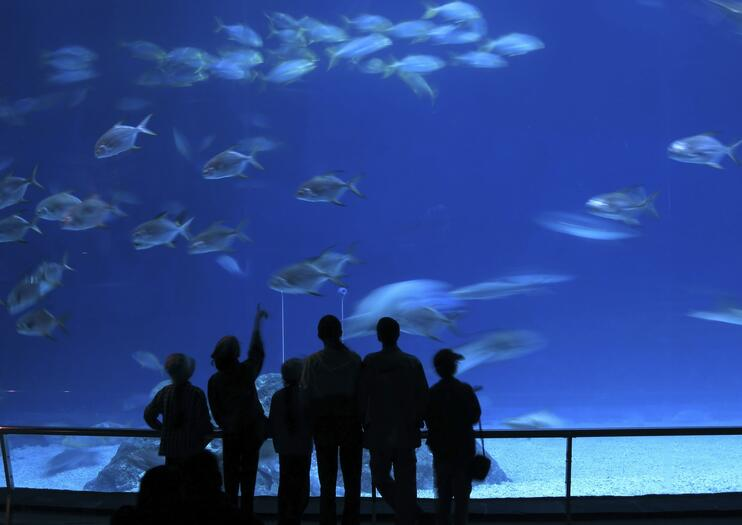 Aquarium of Western Australia (AQWA)