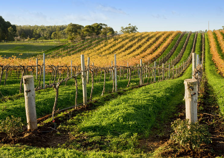 Wine Tours in Adelaide