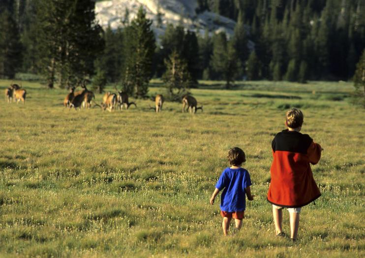 Dicas para Observação de Animais Selvagens em Yosemite