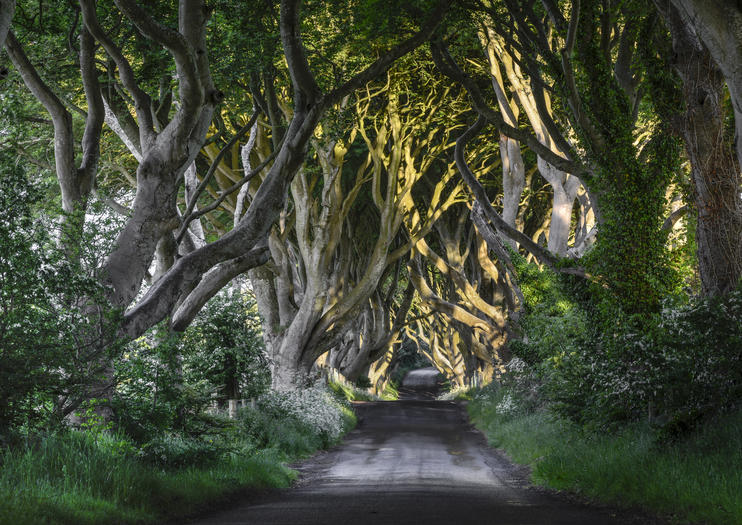 Game of Thrones Tours From Belfast