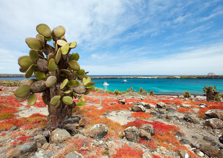 Island Hopping Tours in the Galapagos Islands