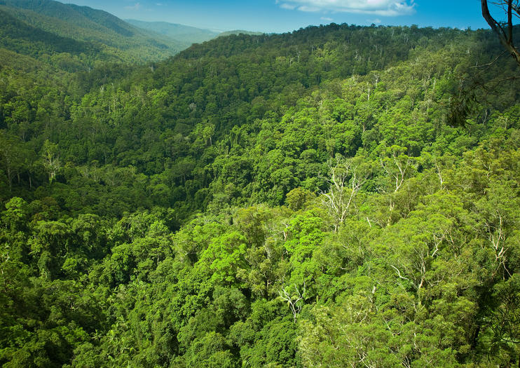 The Tamborine Rainforest Skywalk Offers A Whole New Perspective On Forest