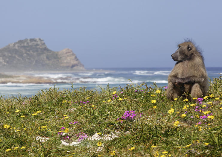 Wildlife Safari Tours from Cape Town