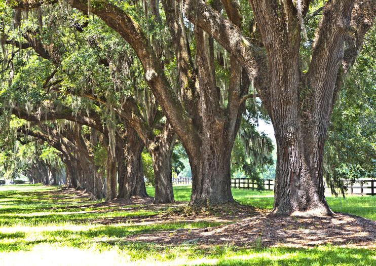 Historic Rosedale Plantation