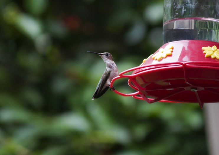 Wing Haven Garden and Bird Sanctuary