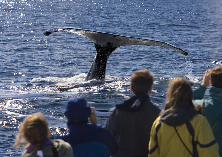 Whale Watching Tours in Perth