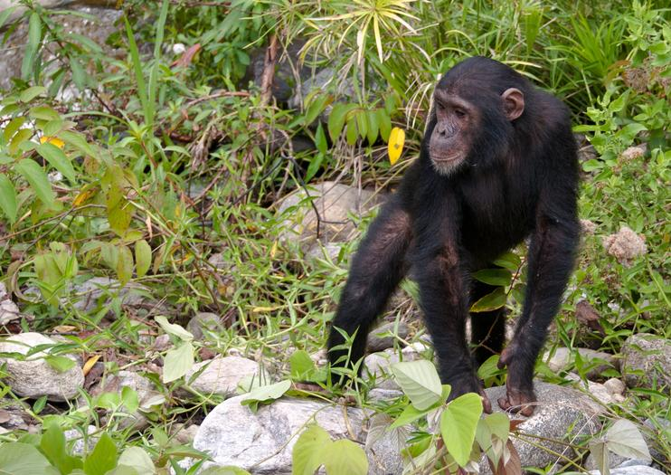 Chimp Eden: Das Jane Goodall Institut