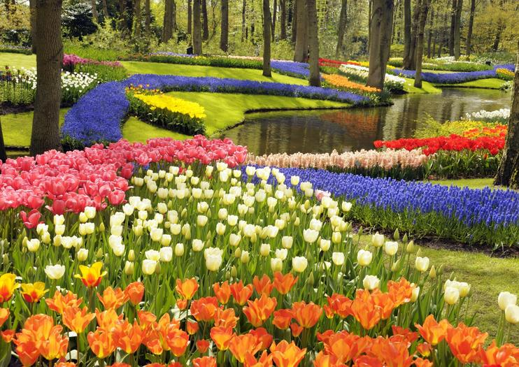 The 5 best keukenhof gardens tours tickets 2018 amsterdam viator with 7 million flower bulbs planted every year across 79 acres 32 hectares keukenhof gardens is a colorful sea of 800 varieties of tulips and other mightylinksfo