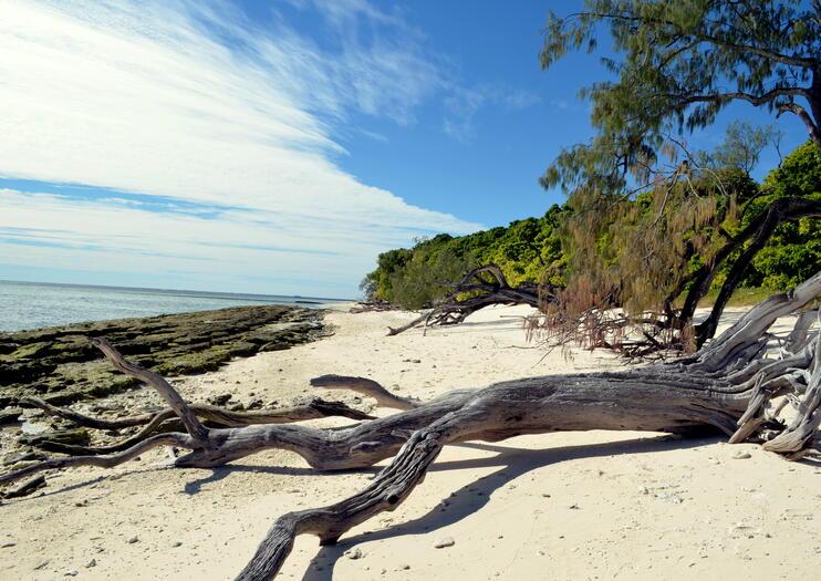 Île Lady Musgrave