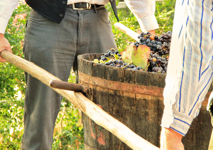 How to Experience Grape Harvest in Burgundy