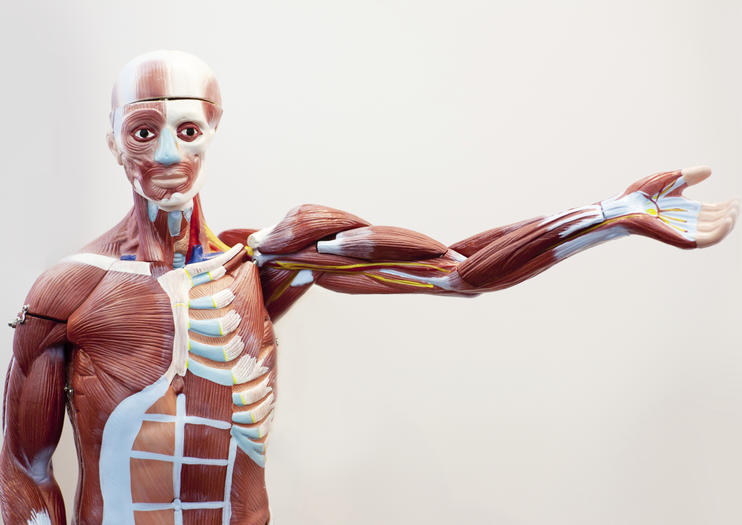 Bodies : The Exhibition