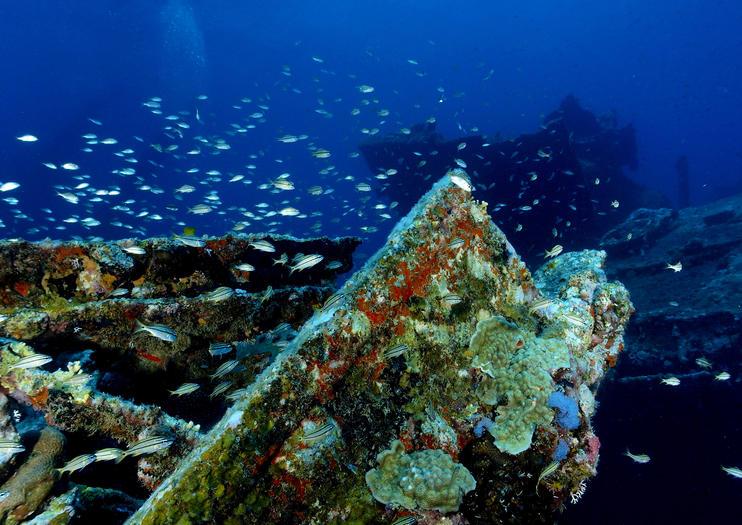 Antilla Shipwreck Cosas Que Hacer En 2021 Viator