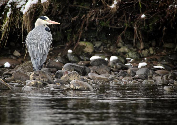 Reserva Natural Local Merkinch