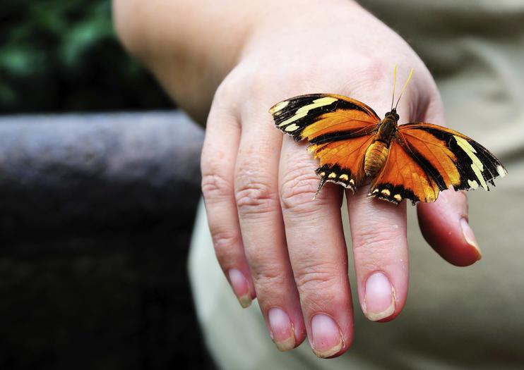 Jardins des papillons de Monteverde