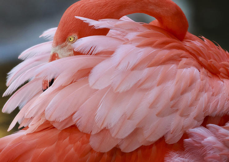 Jardines de Flamingo (Flamingo Gardens)