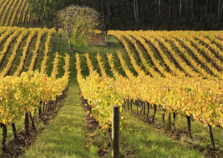 Ultimate Winery Experiences in Australia
