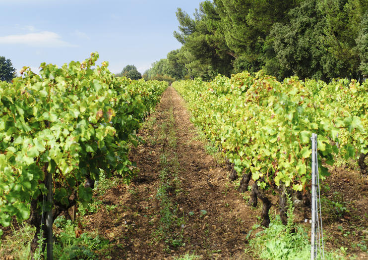 Fronton Wine Region