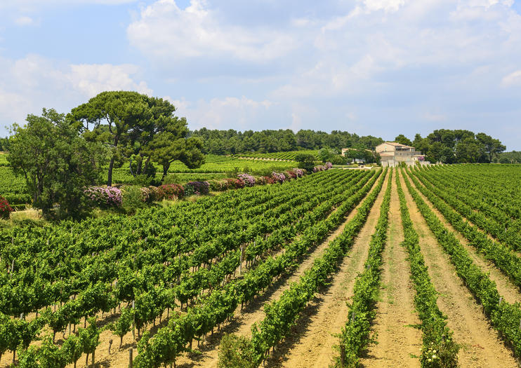 Cabardès Wine Region