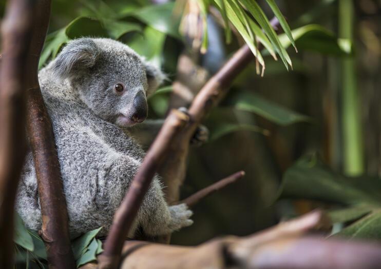 The 10 Best Kuranda Koala Gardens Tours & Tickets 2019 - Cairns