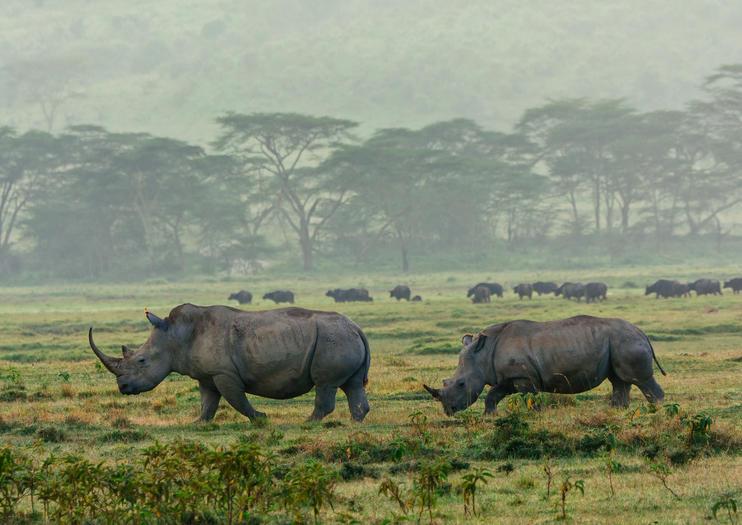 Wildlife Safari Tours from Windhoek