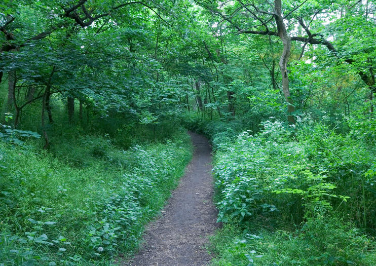 La Selva Viennese