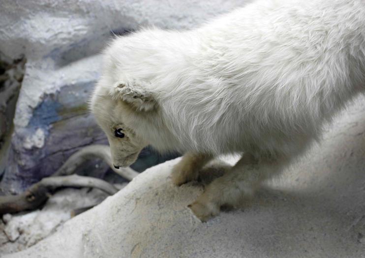 Polar Museum (Polarmuseet)