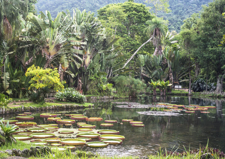 Parque Ecológico January